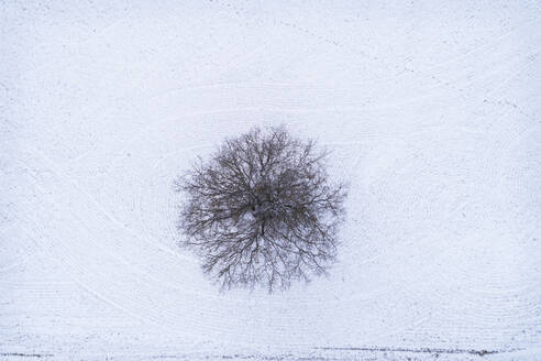 Aerial view of a tree alone in the middle of land covered with snow in Estonia. - AAEF04030