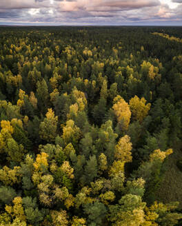 Aerial view of colorful forest in Estonia - AAEF04066