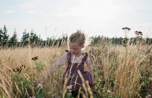 Young girl sitting in a meadow picking flowers at sunset - CAVF63667