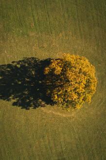 Austria, Lower Austria, aerial view of colorful autumn grove in field - HMEF00608