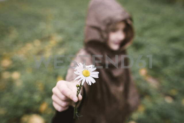 Boy presenting Chamomile, close-up - EYAF00507 - Ekaterina Yakunina/Westend61