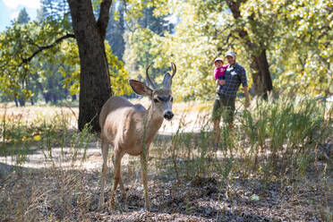 Portrait of mule deer watched by father and baby girl, Yosemite National Park, California, USA - GEMF03195