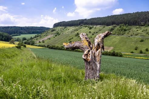 Germany, Bavaria, Baden-Wuerttemberg, scenic view of field - EGBF00347
