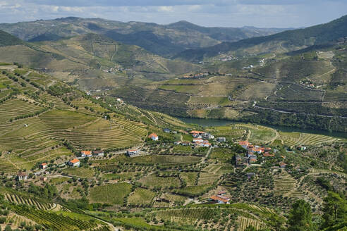 Portugal, Douro Valley, terraced vineyard overlooking village and Douro river - MRF02131