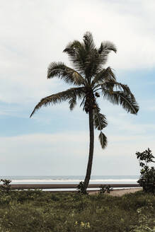 Palm tree on the beach - CAVF64969