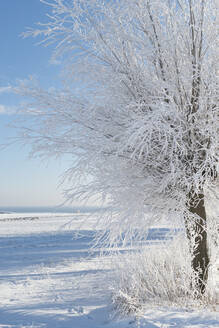 Tree at winter - JOHF02324