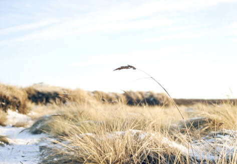 Grass on beach - JOHF02482