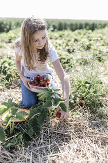 Girl picking strawberries on a field - STBF00446