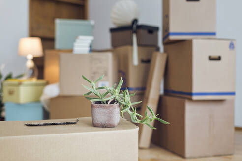 Potted plant on cardboard box in an empty room in a new home - MAMF00807