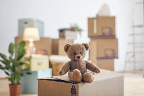 Teddy bear on cardboard box in an empty room in a new home - MAMF00810
