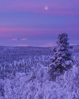 Winter landscape at sunset - JOHF03088