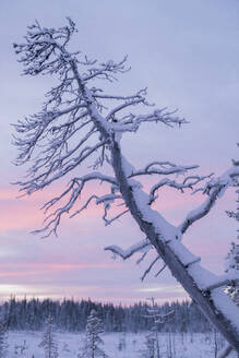 Tree at sunset - JOHF03115