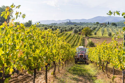 Tractor parked in a vineyard - MGIF00790