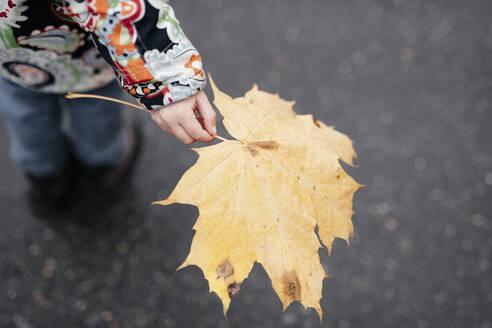 Little girl's hand holding autumn leaf - EYAF00563