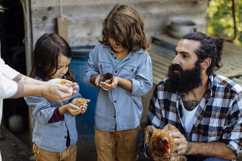 Father with two kids holding chicken and chicks on an organic farm - SODF00092