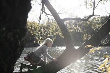 Little girl climbing on tree in autumn - EYAF00588