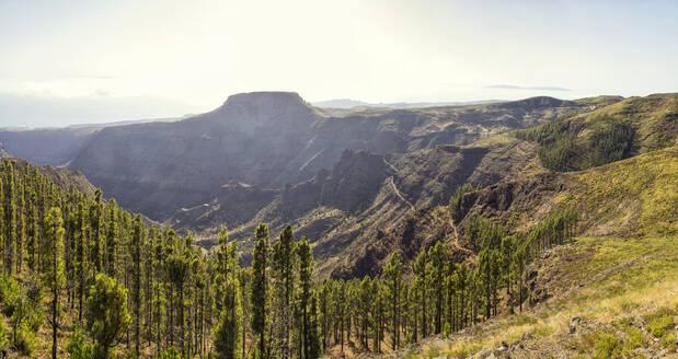 Tafelberg la Fortaleza vom Gipfel des Garajonay gesehen, Panorama, Nationalpark Garajonay, Unesco Weltnaturerbe, La Gomera, Kanarische Inseln, Kanaren, Spanien - MAMF00878