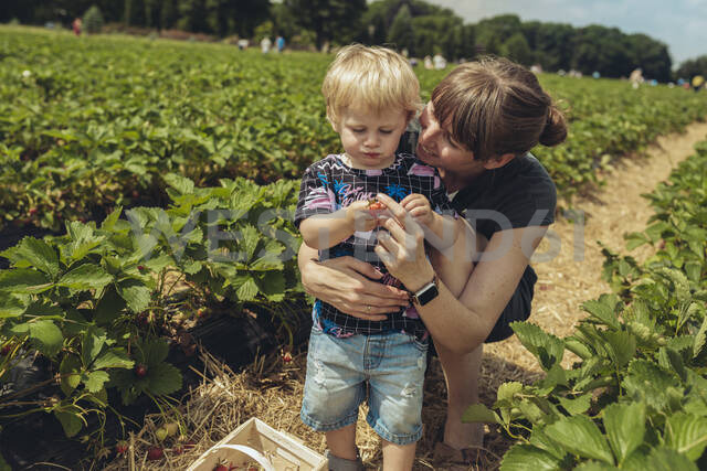 Mother and son picking strawberries in strawberry plantation - MFF04904 - Mareen Fischinger/Westend61
