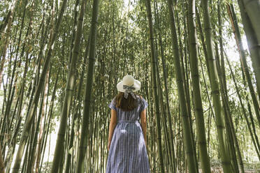 Rear view of woman in a bamboo forest, Aveiro, Portugal - AHSF00941