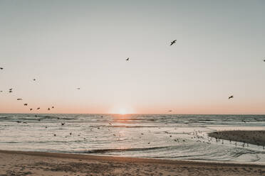 View of flying birds at the beach in the sunset, Costa Nova, Portugal - AHSF00953