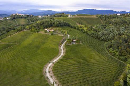 Italy, Friuli Venezia Giulia, Brazzano, Aerial view of winding country road across vast green vineyard - MAUF02976
