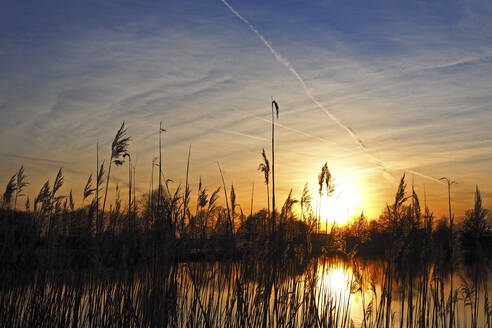 Germany, Bavaria, Silhouettes of reeds growing in pond at sunset - HUSF00096