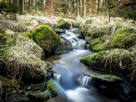 Germany, Bavaria, Stream flowing in Upper Palatinate Forest - HUSF00099