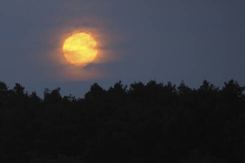 Germany, Bavaria, Yellow moon rising over silhouettes of forest trees at night - HUSF00102