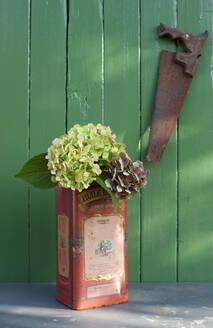 Deutschland - Hamburg - Altes Land - Herbstdekoration - Hortensienblüten in einem alten Olivenölkanister -Requisite: eine alte rostige Säge - GISF00474