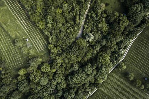 Austria, Lower Austria, Aerial view of dirt road along green vast vineyard - HMEF00638