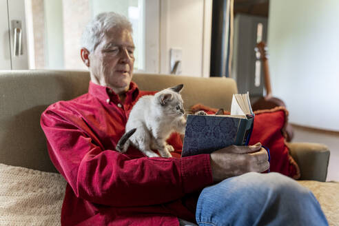 Senior man with kittens siiting on sofa reading a book - AFVF04129