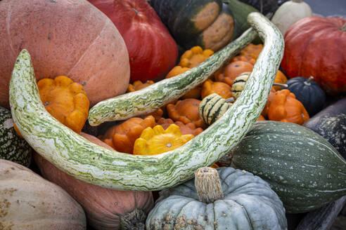 Pumpkins at market stall - FCF01828