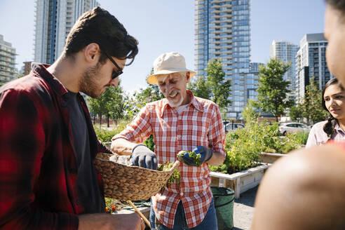 Man teaching gardening to young adults in sunny, urban community garden - HEROF39369