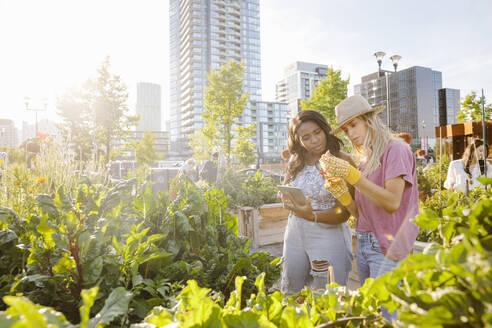 Young women friends with digital tablet in sunny, urban community garden - HEROF39456
