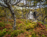 Waterfall and autumn colour in Anderdalen National Park, Senja, Norway, Scandinavia, Europe - RHPLF12527
