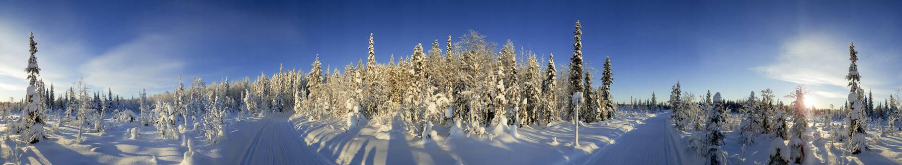 Snow covered trees and track, Kuusamo, Lapland, Finland, Europe - RHPLF12542