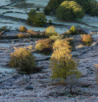 Frost covered trees and fields in autumn, Peak District National Park, Derbyshire, England, United Kingdom, Europe - RHPLF12572