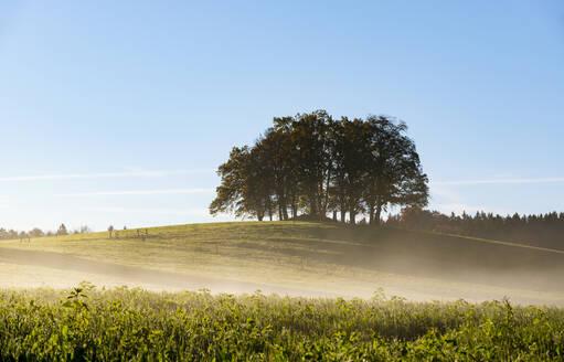 Baumgruppe im Morgennebel, Schwaigwall bei Geretsried, T�lzer Land, Oberbayern,Bayern, Deutschland, - LHF00738