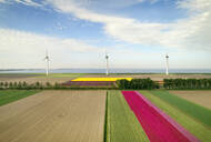 Windfarms both on and offshore, blossoming bulb fields in polder, Urk, Flevoland, Netherlands - CUF52602
