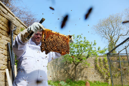 Male beekeeper inspecting honeycomb frame in walled garden - CUF52966