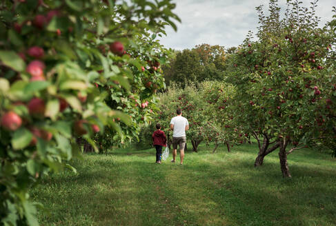 Father and son walking through an apple orchard in the fall together. - CAVF66949