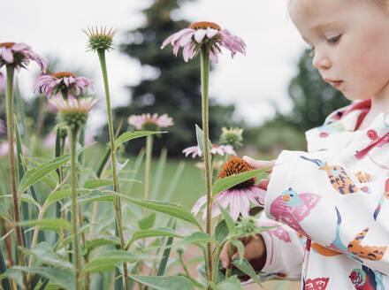 Girl touching eastern purple coneflower blooming at park - CAVF67695