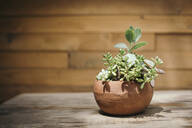 Potted plant on table against wooden wall - CAVF67788