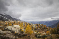 Hiker walking through alpine plateau in autumn, Sondrio, Italy - MCVF00061