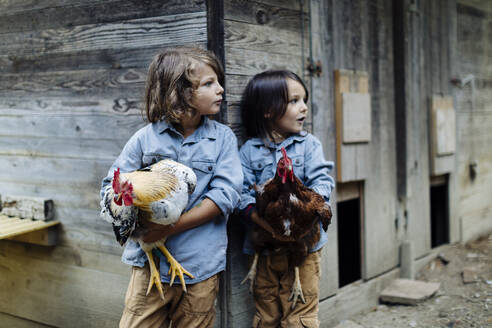 Two kids holding chickens on an organic farm - SODF00306