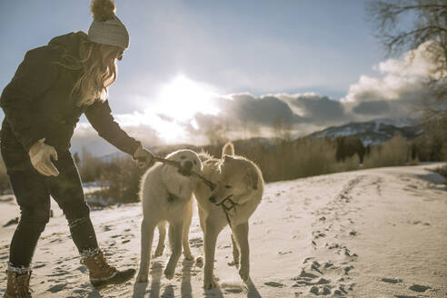 Side view of woman playing with dogs carrying stick in mouth on snow covered field - CAVF68288