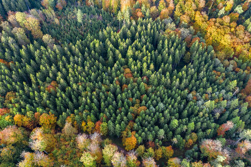 Germany, Baden-Wurttemberg, Aerial view of Swabian-Franconian Forest in autumn - STSF02341