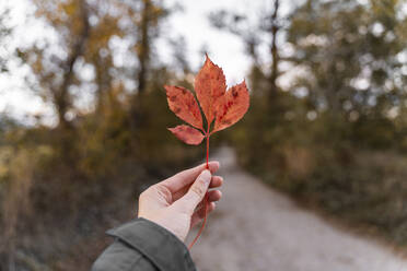 Woman holding an autumn leaf outdoors - AFVF04160