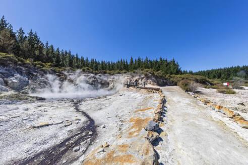 Hell's Gate, Geothermal Park, Tikitere, Rotorua, North Island, New Zealand - FOF11015