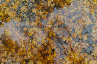Autumn leaves in a puddle - AHSF01192